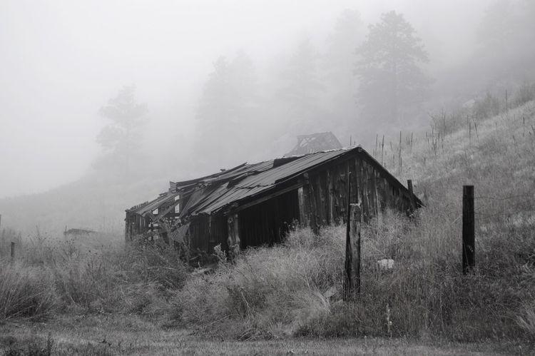 Fog Nature Outdoors Abandoned EyeEmNewHere