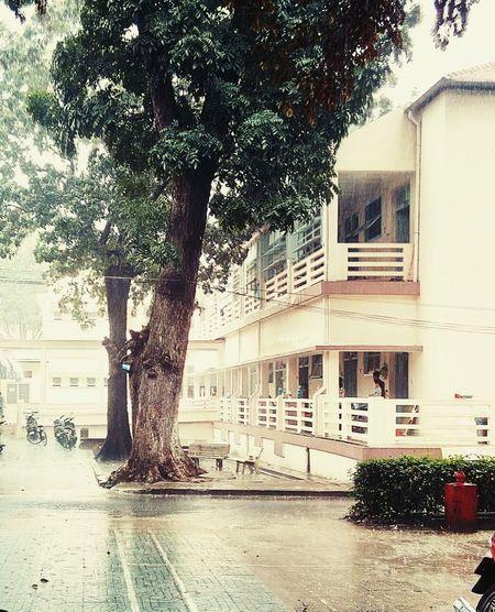 Sài Gòn mưa trưa nắng sớm . . .