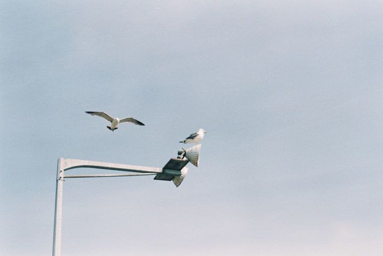 Animal Themes Animal Wildlife Animals In The Wild Bird Day Film Film Photography Filmcamera Flying Fm2 Low Angle View Mid-air Nature Nikon No People Outdoors Seagull Sky Spread Wings