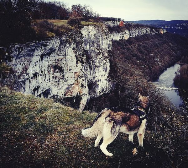 Husky Husky ♡ Huskyphotography Dog Nature Dogs Pets Paysage De France Sky Close-up Horizon Over Water Rushing Calm