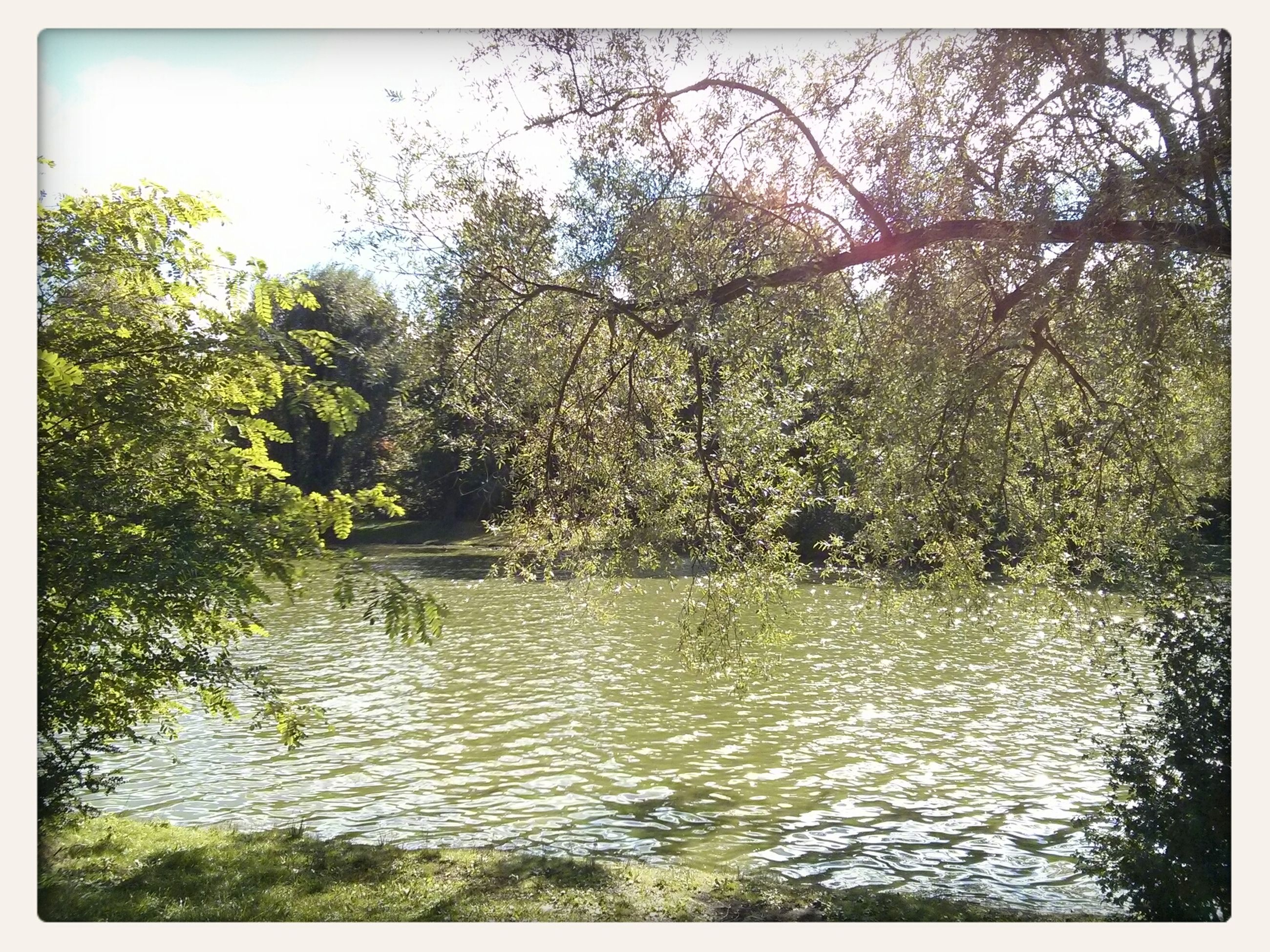 water, transfer print, tree, auto post production filter, waterfront, tranquility, tranquil scene, scenics, beauty in nature, nature, river, lake, rippled, growth, forest, day, branch, idyllic, outdoors, reflection