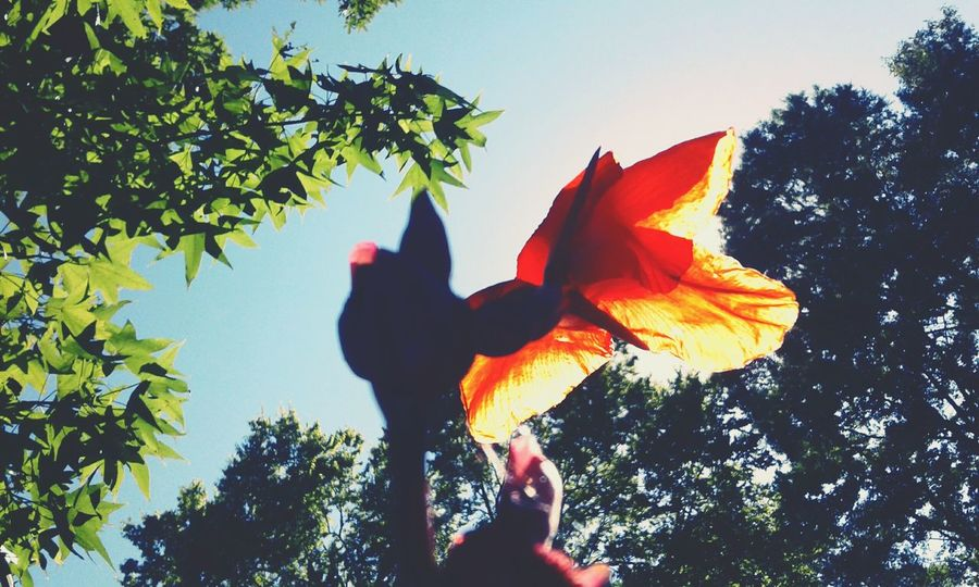 Outdoors Holding Nature Leaf Day Sky Close-up Beauty In Nature Clear Sky Orange Flower FireyGlow