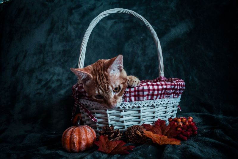 Cat sitting in basket on table