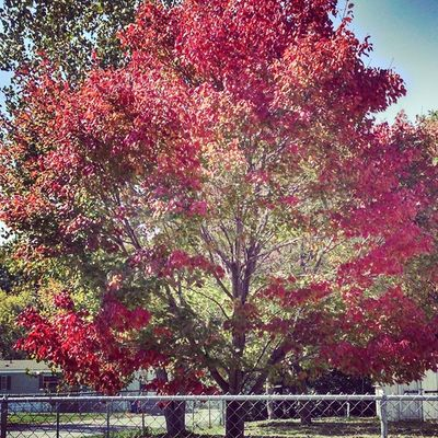 Fall is not that far away. Love when leaves turn and the weather is so crisp.