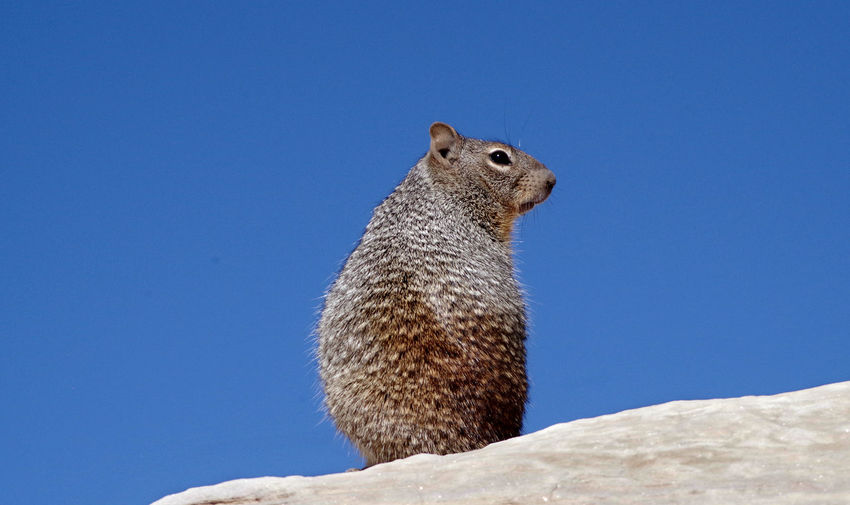 Back Copy Space Squirrel Animals In The Wild Behind Blue Clear Sky Close-up Low Angle View Nature No People One Animal Profile View Sky