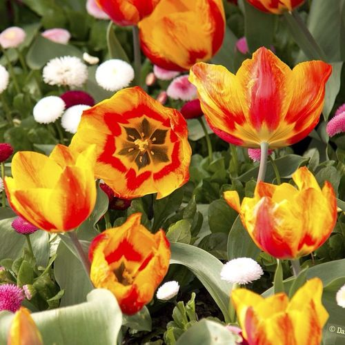 Open Flowers
