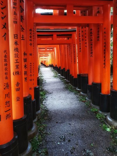 The many Torii