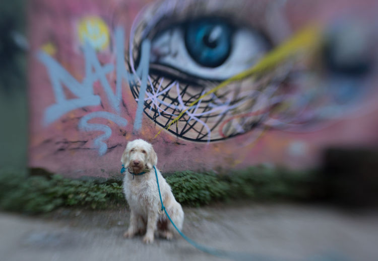 Portrait of dog outdoors