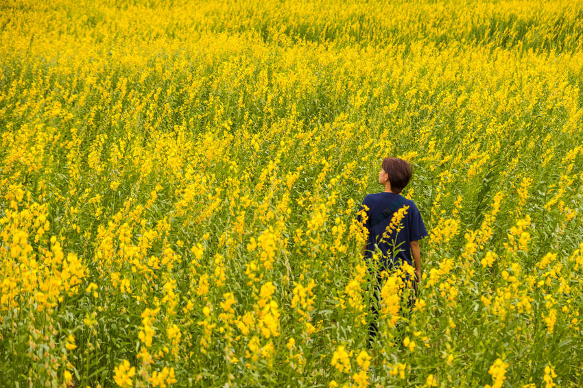 Agriculture Beauty In Nature Crop  Crotalaria Juncea Farm Field Flower Flowering Plant Freshness Growth Hairstyle Land Landscape Nature Oilseed Rape One Person Outdoors Plant Rear View Rural Scene Springtime Standing Sunn Hemp Three Quarter Length Yellow