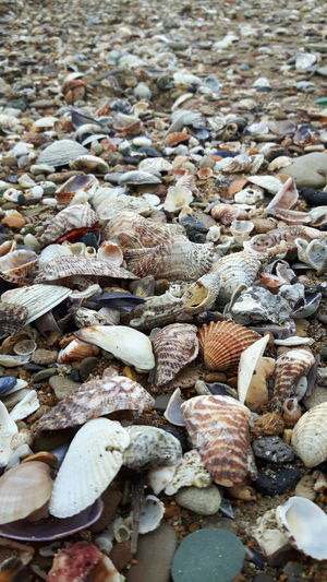 Pebble Beach Water Beach Backgrounds Full Frame Pebble Sunlight Seashell Shore Close-up Gastropod Detail Ground Clam Snail Fishing Equipment Mollusk Stone - Object Stone Tile Slow Water Drop Fly Agaric Young Plant Droplet Sand Animal Shell Shell Animal Antenna Door Handle Soil