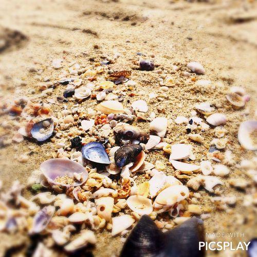 カラフルな貝殻 連投ごめんなさい 季節外れ リフレッシュ