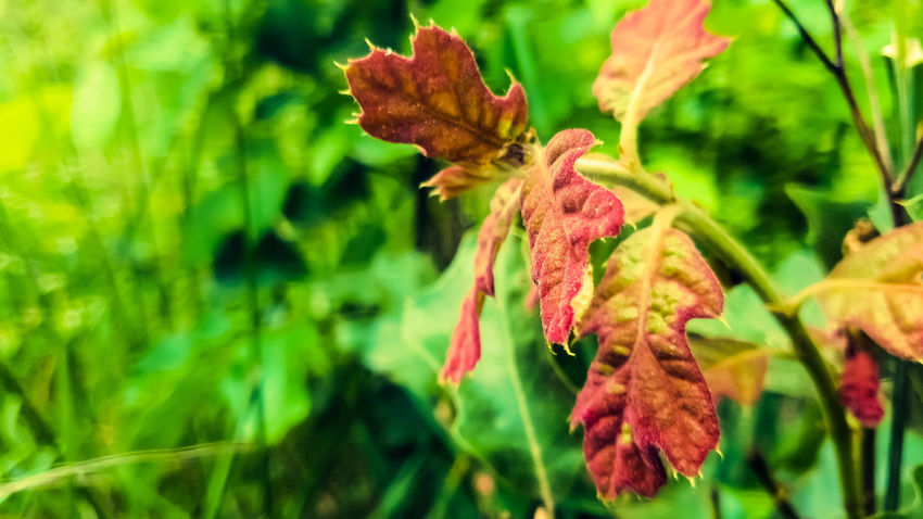 Subtle natural Color... Nature Plant Leaf Beauty In Nature Close-up Day Outdoors
