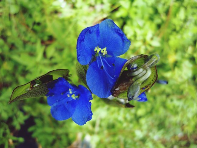 Mírame Flores Flowers Blue Azules Campo Silvestre