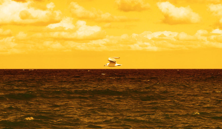 #clouds  #colours #Filter  #horizon #innatural #killbill #seagull #yellow Animal Themes Bird Flying Horizon Over Water Nature No People Outdoors Sea Sky Water EyeEmNewHere