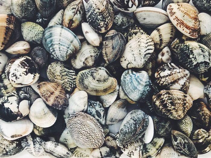 Full frame shot of clam shells