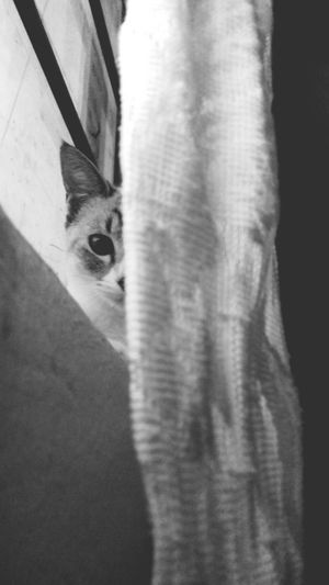 🐾 Cat Cats Of EyeEm One Animal Domestic Cat Day Night Photography Black First Eyeem Photo Photograph Faces Of EyeEm Phothograph EyeEm Selects Black & White Black & White Photography Cat Photography