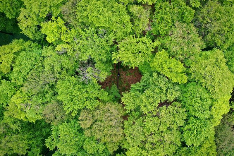 Wood Drone  Dronephotography Trees Forest Green Color Full Frame Plant High Angle View No People Backgrounds Nature Plant Part Tranquility Outdoors Land Leaf Day Beauty In Nature Field Directly Above Close-up Growth Moss Lush Foliage
