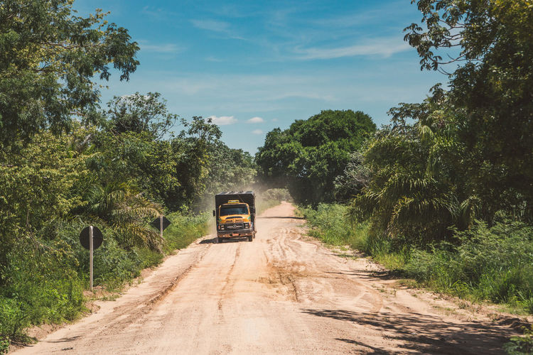 Our way out of the Pantanal. Adventure Car Dirt Dirt Road Explore Forest Jungle Lorry Moving Palm Road Sky Street Transport Transportation Travel Travel Destinations Travel Photography Tree Trees Truck Vehicle Wilderness Wilderness Area Work BYOPaper! Live For The Story The Great Outdoors - 2017 EyeEm Awards The Photojournalist - 2017 EyeEm Awards The Street Photographer - 2017 EyeEm Awards EyeEmNewHere Let's Go. Together. Sommergefühle EyeEm Selects Lost In The Landscape An Eye For Travel Focus On The Story This Is Latin America The Great Outdoors - 2018 EyeEm Awards The Traveler - 2018 EyeEm Awards A New Beginning A New Perspective On Life Capture Tomorrow