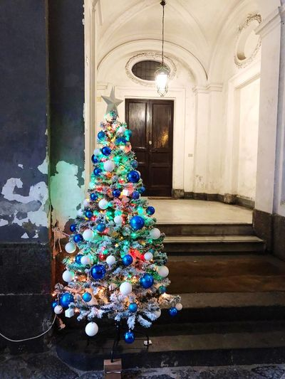 Naples Celebration Architecture Multi Colored Decoration Holiday Indoors  Christmas christmas tree No People Built Structure Christmas Decoration Tree Day Window Christmas Ornament