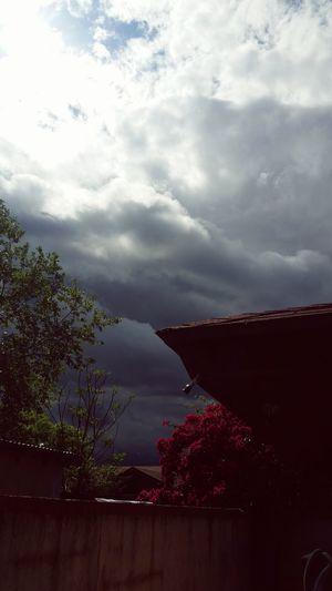 Texas Laredo Bipolor Weather Darkskies Onlyintexas Thunderstorms Pinkflowers Mothernature