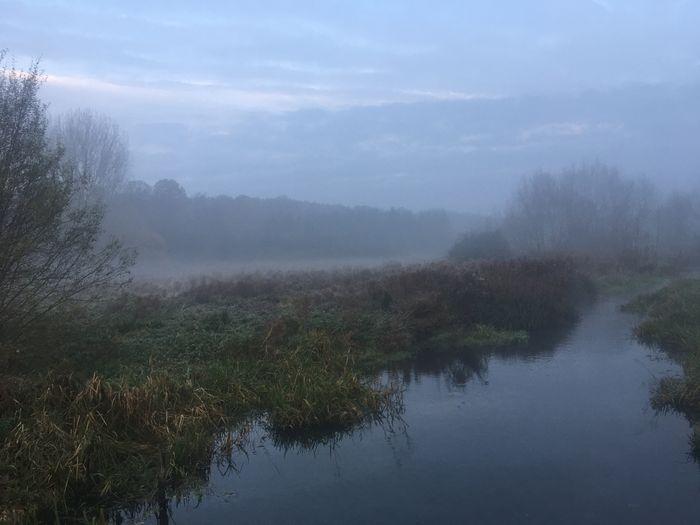 Plant Fog