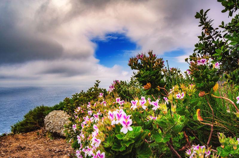 Flowers blooming on tree by sea against sky