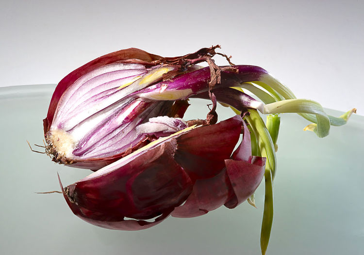 Onion Surgery Close-up Beauty In Nature Plant No People Studio Shot Fragility Indoors  Food Nature Vulnerability  Pink Color Food And Drink Vegetable Purple Onion Beauty In Decay