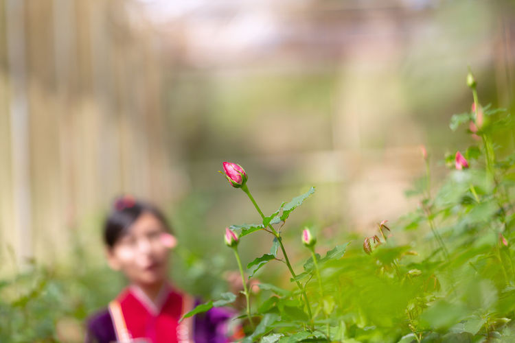 Plant Flower Flowering Plant Growth Freshness Beauty In Nature Real People Selective Focus Fragility Vulnerability  Nature Day Pink Color Lifestyles Field Land One Person Leisure Activity Outdoors Focus On Foreground Flower Head