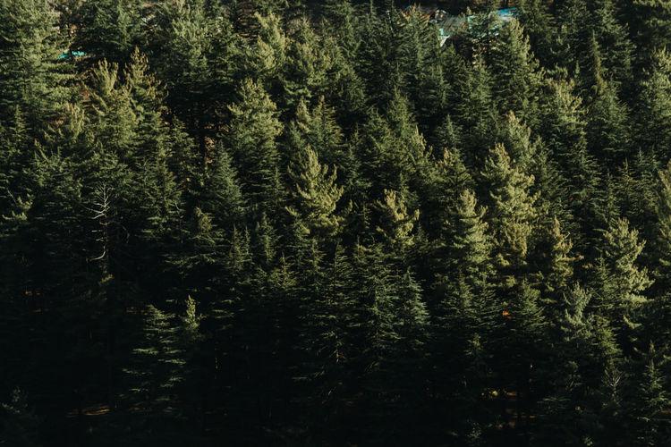 Full frame shot of trees in lake