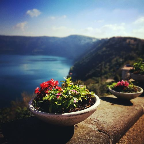 Nature Freshness Outdoors Flower Mountain Volcano Italy Colorful Colours Blue Green  Day Illuminated Yellow Castelgandolfo Streetart Lake Lakeside Landscape View View From Above Autumn