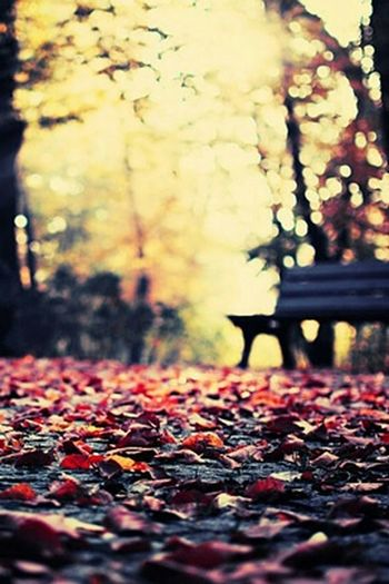 Autumn♥ Leafs Bench