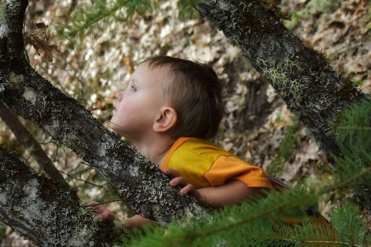 Boy on tree trunk