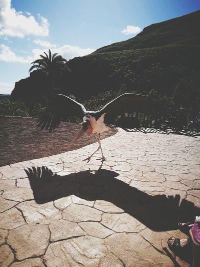 Gran Canaria Palmitospark Palmitos Park Holidays ☀ Holiday Maspalomas Bird