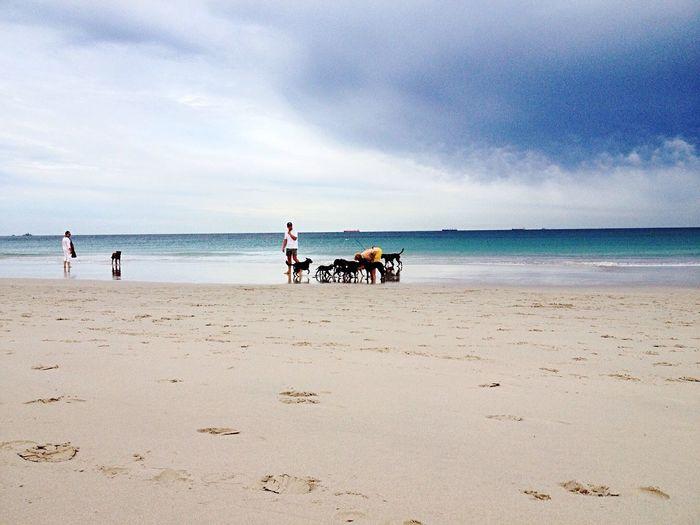 Doggie beach antics 😳