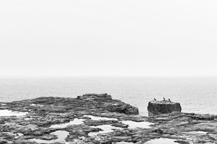 Cormorants Sea Water Scenics - Nature Copy Space Nature No People Outdoors Beauty In Nature Tranquil Scene Horizon Over Water Sky Birds Bw Black And White Cormorant  Ocean Landscape Foggy Misty Tranquility Rock Day