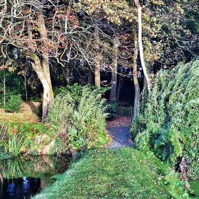 #improvedimage #green #trees #path #wood #copse Wood Green Trees Path Improvedimage Copse