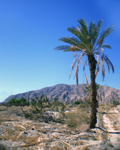 Clear Blue Sky Landscape_Collection Palm Tree Beauty In Nature Blue Clear Sky Day Landscape Mountain Nature No People Outdoors Palm Tree Scenics Sky Tranquil Scene Tranquility Tree