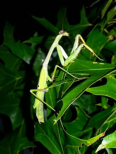 Bug Green Hi! Hanging Out Insect Photography My Friend Safehaven Naturelovers Abugslife Flowers And Insects