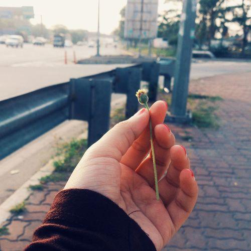 Cropped hand holding tiny flower on sidewalk