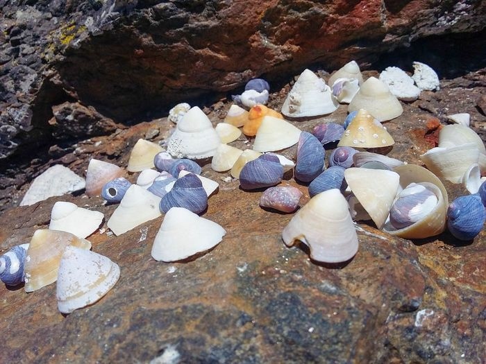 Shell Rock Solid Rock - Object Animal Wildlife High Angle View Beach No People Land Day Nature Shell Stone - Object Animal Water Sunlight Animals In The Wild Beauty In Nature Sea Sand Outdoors