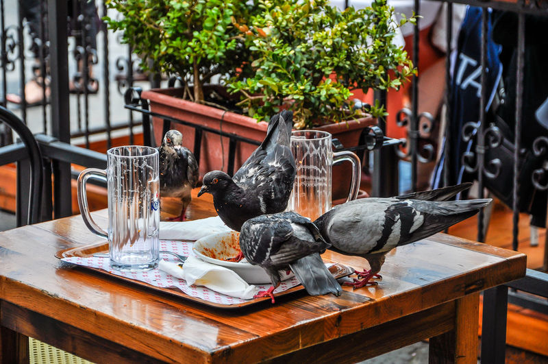 View of birds on table at yard