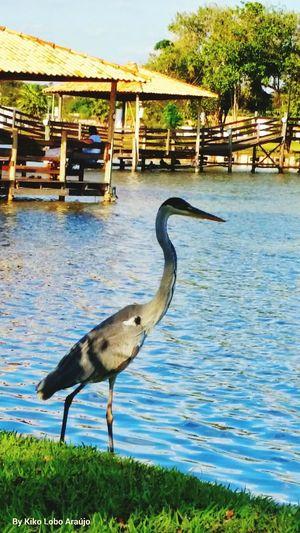 Termas De Ibirá Lagos Garça Cinza Turismo Aguamineral Parque Do Balneário Saúde