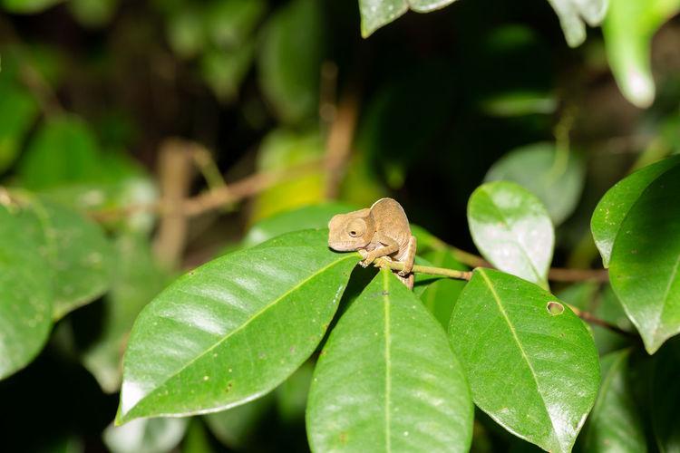 Close-up of a frog on leaf