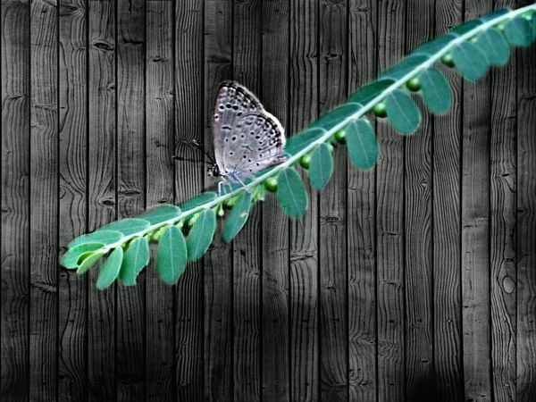 My edit.. Fence Green Color Close-up Multi Colored Plant Nature Growth Day Outdoors No People Flying Vibrant Color Beauty In Nature Focus On Foreground Full Frame EyeEmBestEdits My Edit Zoology Butterfly Perching Insect Wildlife Animals In The Wild Animal Themes