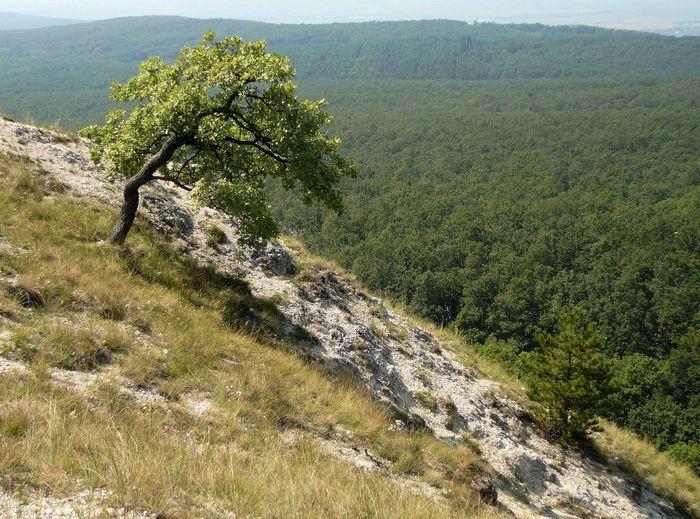 Budai-hegység,