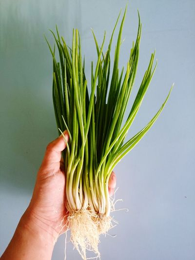 Cropped hand of person holding scallions against wall