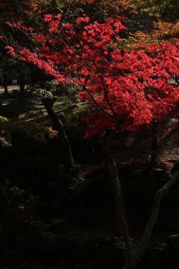 Japan 奈良 Nara