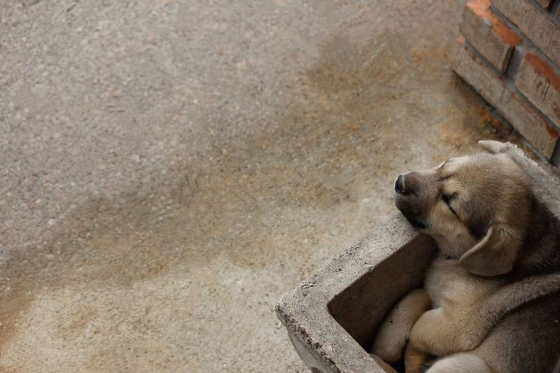 Close-Up Of Puppy Sleeping In Concrete