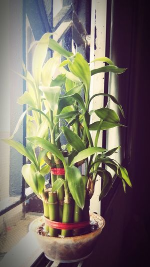 love 😘 Bamboo