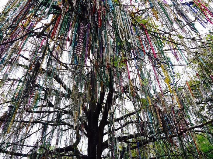 Adorned Celebration Colorful Looking Upward Mardi Gras Mardi Gras Beads Mardi Gras Beads In Tree Mardi Gras Necklaces Mardi Gras Throws Mardi Gras Throws In Tree New Orleans Tree New Orleans, LA Tree Adorned With Beads